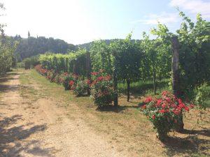 Le vigne di Hilde Petrussa
